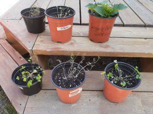multaj specoj de plantoj en potoj.  May species of plants in pots.